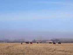 fall bull pasture