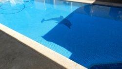 Regular Pool maintenance Job1