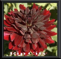Rip City  BB ID Dk Red