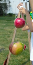 Apple-on-a-String Game