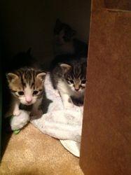Three Little Tigers