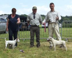 NWTF OPEN SHOW 2014 - Best Jack Russell (right) & Reserve (left).
