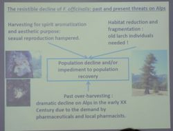Carolina Girometta on return of Fomitopsis officinalis to Italian Alps: conservation strategies