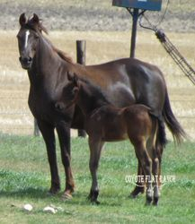 CFM Essence Of Time & 2014 Colt
