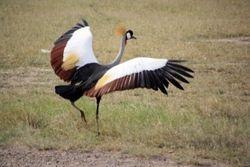 Bird - Amboseli Game Reserve