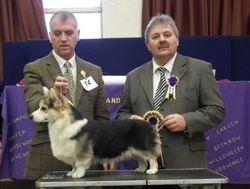 Best Puppy - Pembroke