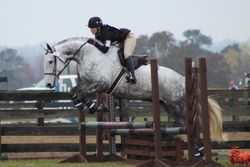Bruno at Full Gallop Farm HT November 2015