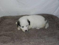 eva - f3 - 02 - audrey's pup