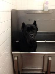Bath time (Sad camper)