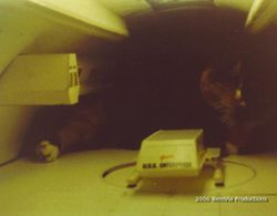 Cardboard Hanger Deck - pic 8