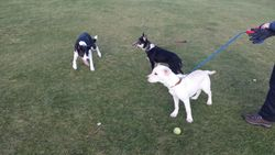 Toby, Charlie& Lily