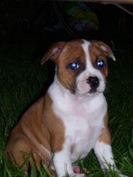 Tilly 10 weeks