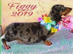 Figgy 2019