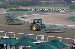 Torn-Up Turf Course