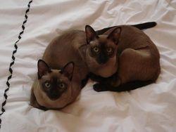A pair of beauties!