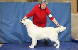 Class 6 Maiden Dog and Class 8 Undergraduate Dog