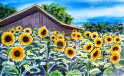 Sunflowers in Barn field, Avila Beach