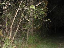 Tree Line at Sachs Bridge