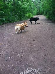 Walk at Battle Creek Dog Park