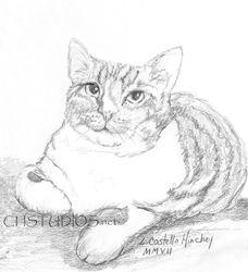 Sketchy Pet Portrait Commission