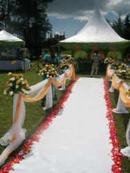 Petals for wedding walkway