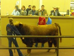Basswood 2nd of Dundonald in the Auction Ring