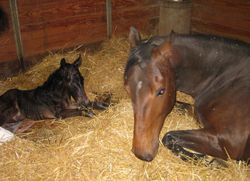 Momma and baby Filly