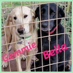 Gemmie and Bella