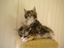 Cleopatra and Izzy