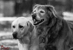 Lucy & Sheena