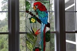 Joy's Macaw