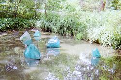 Chihuly in Natural Pond