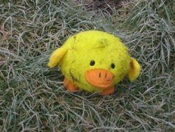 Meet Ducky.