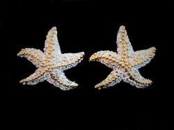 Diamond two tone starfish earrings