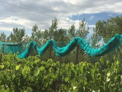 Netting ready to spread over vineyard