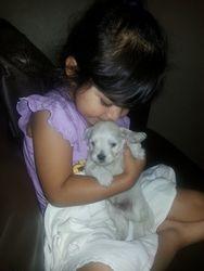 Baby Puppy Love