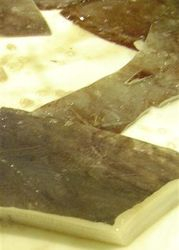 Giant squid bits & pieces  Especie DOSIDUCUS GIGAS  ,Chile