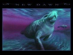 New Dawn / 2010