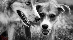 Bo & Leo