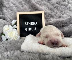 Athena - Female - Purple Collar