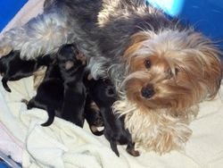 Remy, our mom, with her first litter