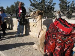 Conversando con un camello