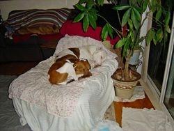 Vinny, Cooper Sleeping