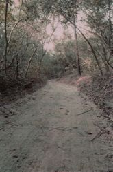 Old Road to Liendo Plantation 1853