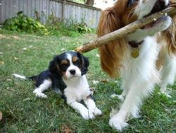 This stick is too big for me.