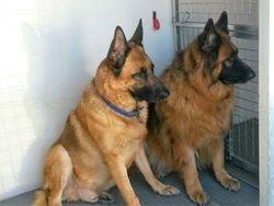 Oscar and Tyson