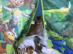 Archie goes Camping!
