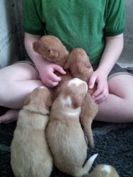 All wanting on lap - 3 week old pups