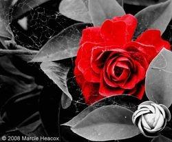 Del Mar Rose