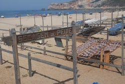 Fish drying out on the beach at Nazare